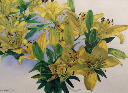 "Vina Curtis: ""A Parade of Lilies"""