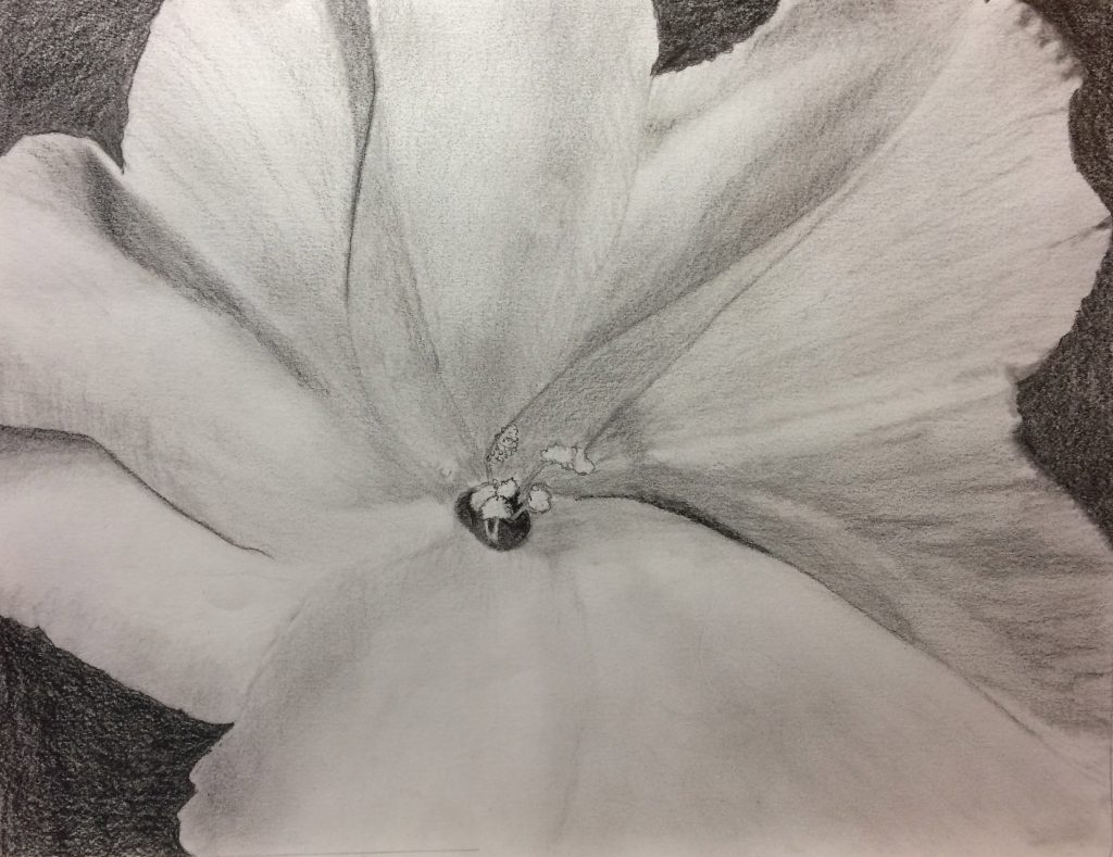 Gayle W., Floral, Graphite