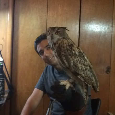 Ollie the Eurasian Eagle Owl at Pastimes for a Lifetime